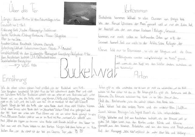 pin steckbriefderbuckelwal on pinterest