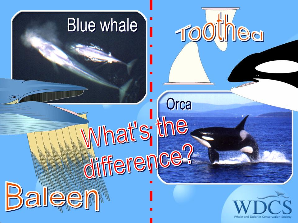 baleen and teeth animation