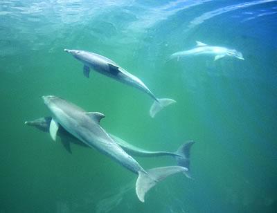 Delfine brauchen auch mal eine Pause! Foto: Mike Bossley/WDCS