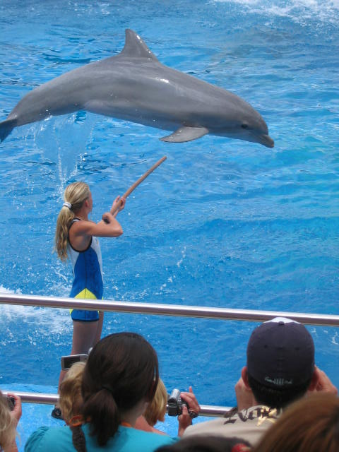 Dolphins performing in captivity.