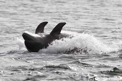 warum springen delfine