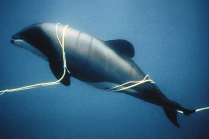 fisheries bycatch
