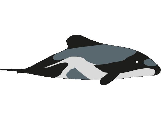 Male Wale - Vorlagen