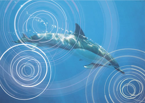 Noise pollution has become a major threat to whales and dolphins in recent