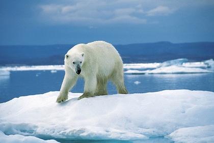 Gemeinsame Arktis Spezial &SS_82