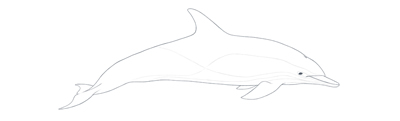 Common dolphin outline